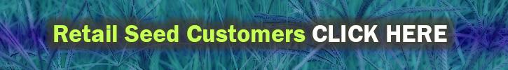 Cynodon Dactylon Bermuda Grass