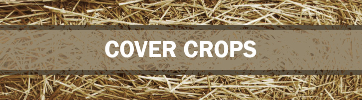 Cover Crops Seeds