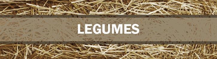 Legumes Seeds