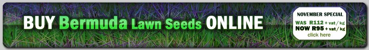 Buy Bermuda Lawn Grass Seeds Online @ GG Online Garden Shopping Website
