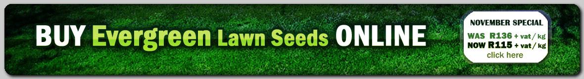 Buy Evergreen / Shade Lawn Grass Seeds Online @ GG Online Garden Shopping Website