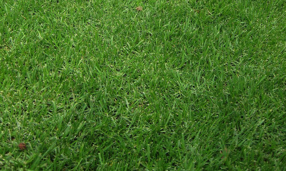 BulkSeed.co.za - Turf Grass Seeds - Turf Lawn Seeds - used for sports fields / campsites / home gardens / public parks / airport airstrips - Turf Lawn Seeds.
